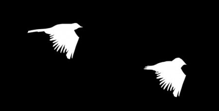 دانلود فوتیج کروماکی پرواز پرنده